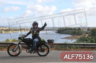 ALF75136