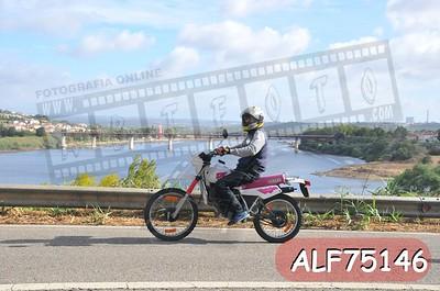 ALF75146
