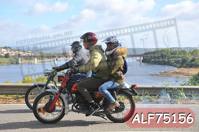 ALF75156