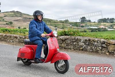 ALF75176