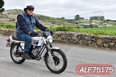 ALF75175