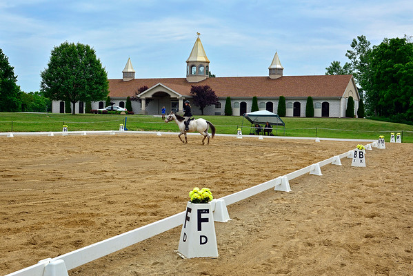 PURE GOLD HORSE STABLES