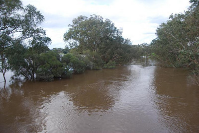 "Swan Valley. A photo taken from ""Barret Bridge"". At times, it was difficult to know where the river was and if you were paddling in paddocks."