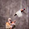 Pheasant_Hunt_2016-2313