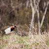 Pheasant_Hunt_2016-2309