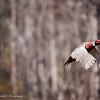 Pheasant_Hunt_2016-2312