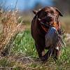 Pheasant_Hunt_2016-2325-2