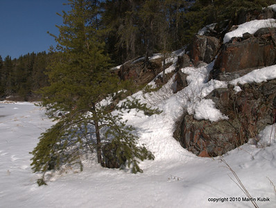 Jack pine, rock, spring snow and a great vacation spot.