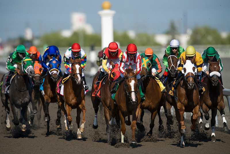 21 June 2009: The 150th edition of the Queen's Plate at Woodbine Race Track in Toronto leaves the starting gate. The race was won by Eurico Da Silva on top of No. 7 Eye of The Leopard.