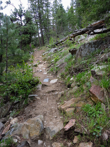 Rougher patches of trail.