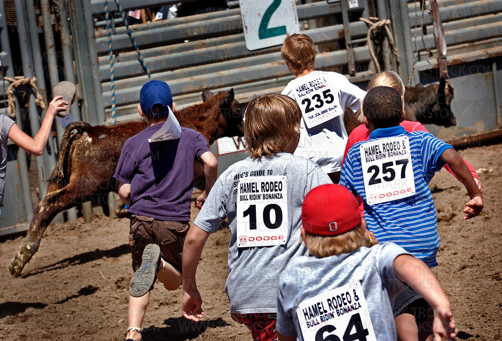 Saturday was family day at the Hamel Rodeo and all the kids were welcome to participate in the Kids Calf Scramble race.  Several dozen boys and girls chased the calfs around the ring trying to grab a flag from the calves' tails.  Hot, dusty fun was had by all.