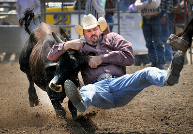 Chad Taylor, Eaton Rapids, MI, wrestles with speeding steer at the Hamel Rodeo Saturday afternoon, July 10, in Hamel.