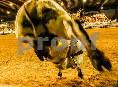 Dangerous Bull out of the chute!