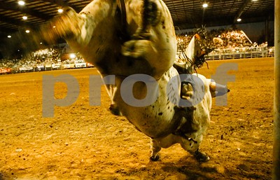 Courageous Bull Rider holds on for dear life