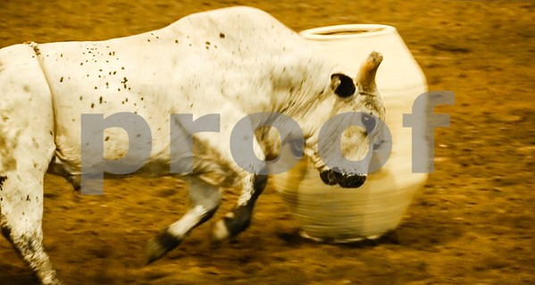 WILD BEAST OF A BULL GORES THE BULL FIGHTER'S BARREL AFTER BUCKING OFF A BULL RIDER
