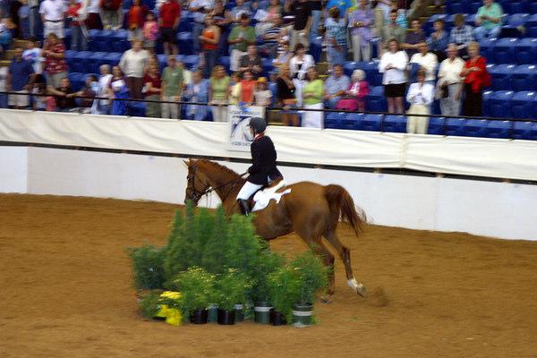 Hunter Jumper 20060624