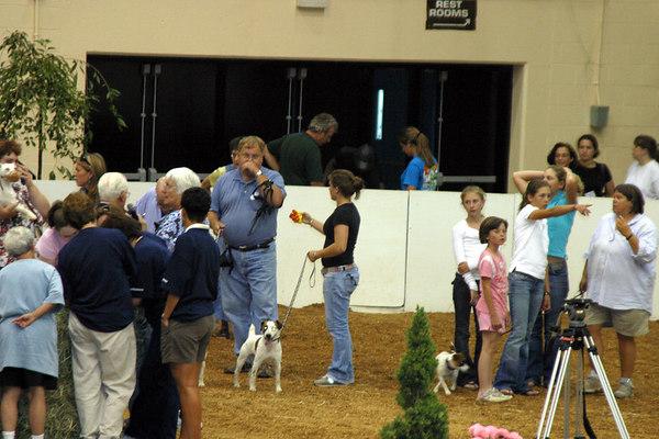 Jack Russell Terrier Races 20060623