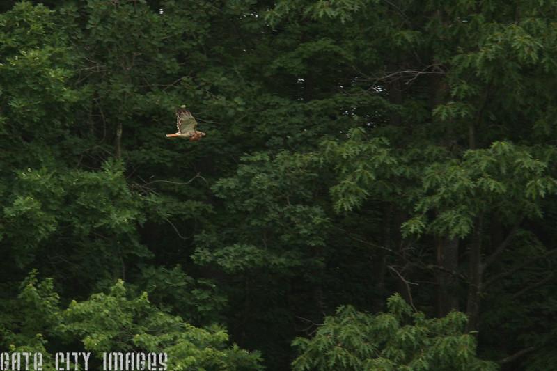 Hawk 2858