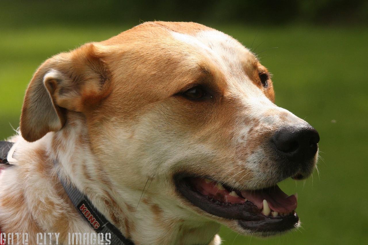 IMG4_43060 dog