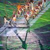 Rio Olympics 05.08.2016 Christian Valtanen _CV42015-2
