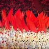 Rio Olympics 05.08.2016 Christian Valtanen _CV42038-2