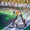 Rio Olympics 05.08.2016 Christian Valtanen _CV42017-2
