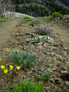 Profusion of low wildflowers at the summit.