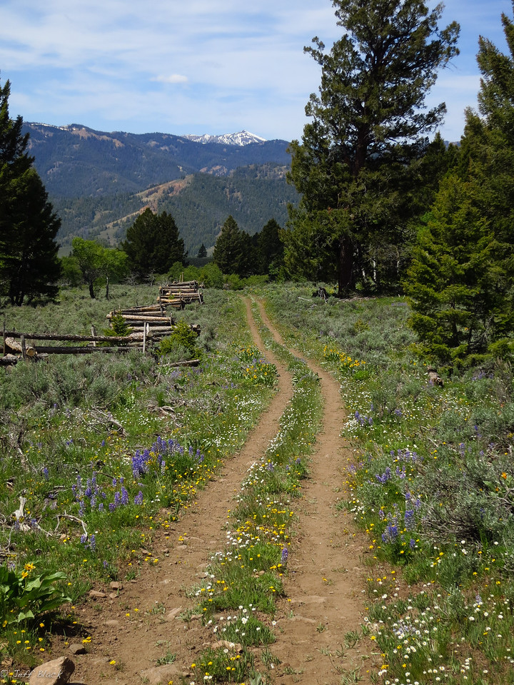 Descent brings wildflowers and clean two track.