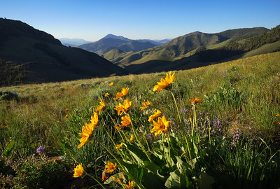 The Lost River range in view, wildflowers grandiose.