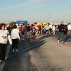 TTrot pre race 015