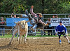 Rodeo-Bull Riders :