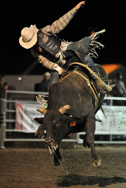 Walt Hester | Trail Gazette<br /> A bull launches itself into the air in an effort to dislodge the cowboy. Rodeo bulls tend to be small and more agile in order to give the cowboys the bigest challenge, and the most points.