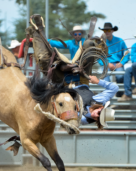 Nanton, Alta _ July 22, 2017 _ Still in the saddle _ Wilson MacDonald of Roseburn Ranches near High River, Alta.  manages to stay in the saddle which ripped off the horses back during the Bronc Riding  event at the Nanton Ranch Rodeo where 16 ranches from Alberta and one from Douglas Lake BC  competed July 21, 22.  Ranch hands from working ranches compete in more traditional rodeo events like cattle branding, sorting and doctoring. (Mike Sturk photo)