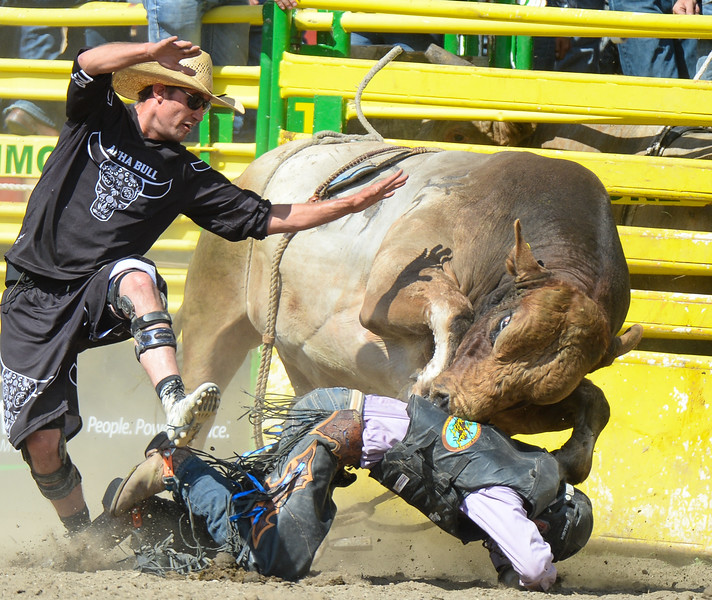 Strathmore, Alta _ July 30, 2016 _ Lumsden, Saskatchewan cowboy Timothy Lipsett takes a head butt from Gretzky as the bull fighter tries to get the bull's attention away from Lipsett in the bull riding event  at the Strathmore Stampede. (Mike Sturk photo)