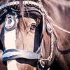 2014 Parade Horse Eye