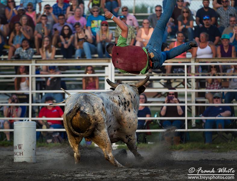 Bull Bowling: Bull 1 - bowlers - 0