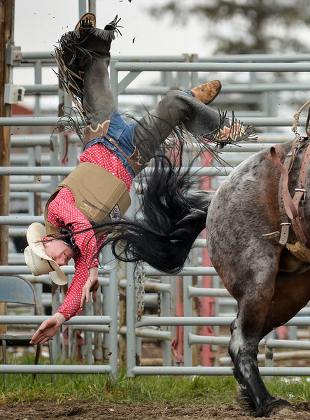 Nanton, Alta - May 5, 2019 - Carter Sandberg of Nanton  bucks off in the saddle bronc event at the Alberta High School Rodeo (AHSRA) rodeo in Nanton, Alta May, 3-5. (Mike Sturk photo)