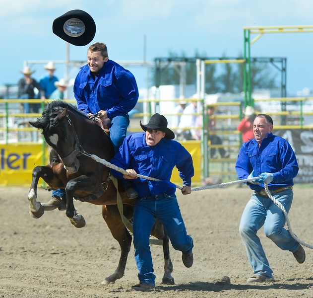 Strathmore, Alta _ July 30, 2016 _ The Ashbacher team was first to saddle and ride a wild horse during the Strathmore Stampede event Saturday,  July 30. (Mike Sturk photo)<br /> <br /> Rider – Brodie Stumpf<br /> Earman – Zane Ashbacher (he's beside the horse)<br /> Shankman – Rick Quarrell