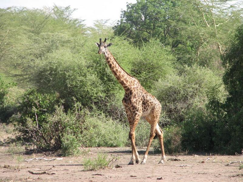 ,Lake Manyara National Park
