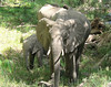 ,Lake Manyara National Park