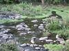 river in Lake Manyara National Park