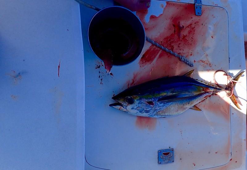 Albacore Tuna-sushi tonight