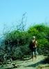 Rufos Egret very rare.