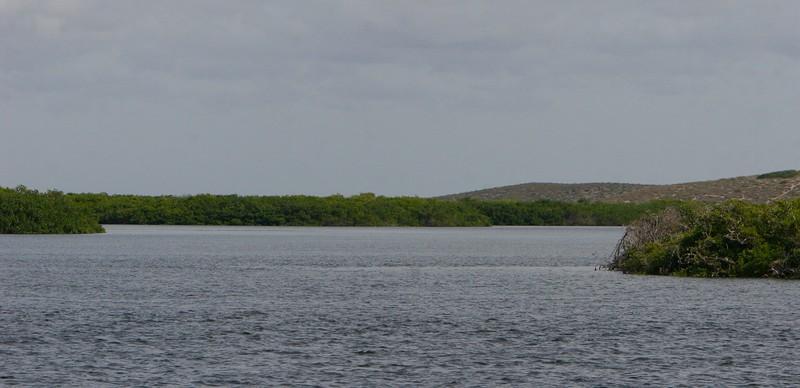 Mangrove estuaries