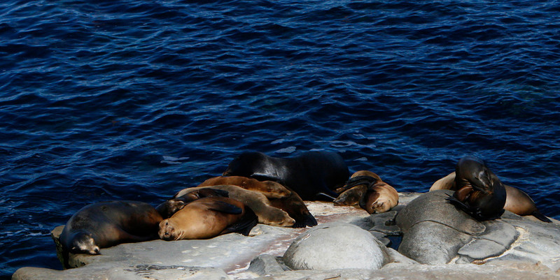 Sea Lion Ledge