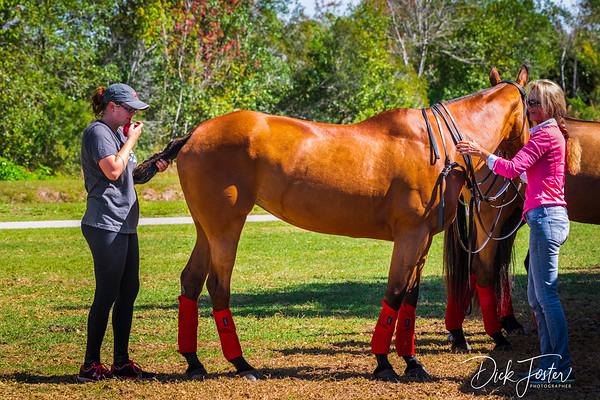 Preparing the Horses