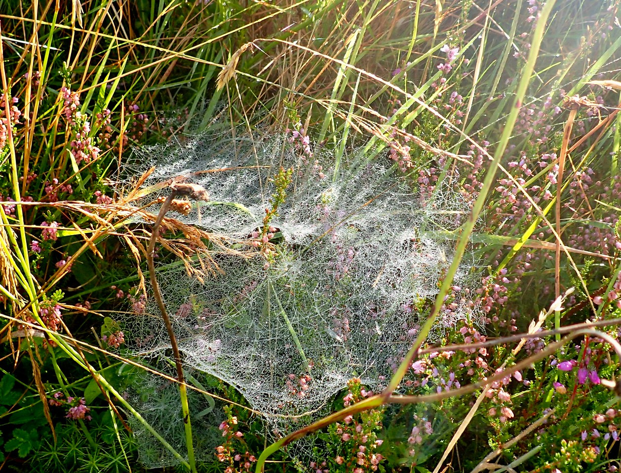 amazing webs in the dew