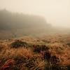 a tad misty