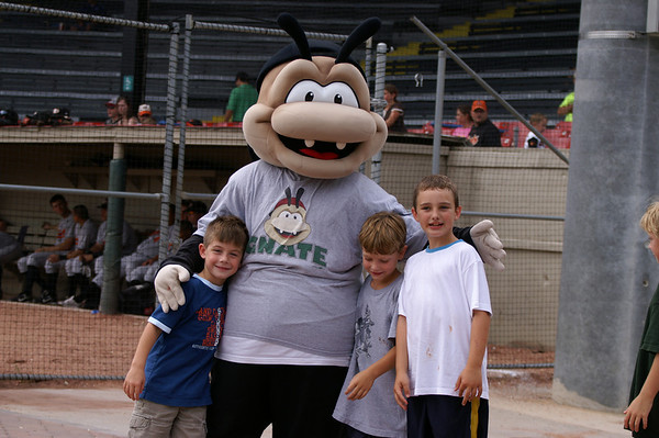 Savannah Sand Gnat Baseball