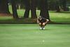 2014_05_28 State Golf-88